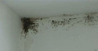 5 Reasons to call a mold removal specialist in San Francisco, CA