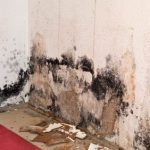 Mold and mildew remediation procedures in San Mateo
