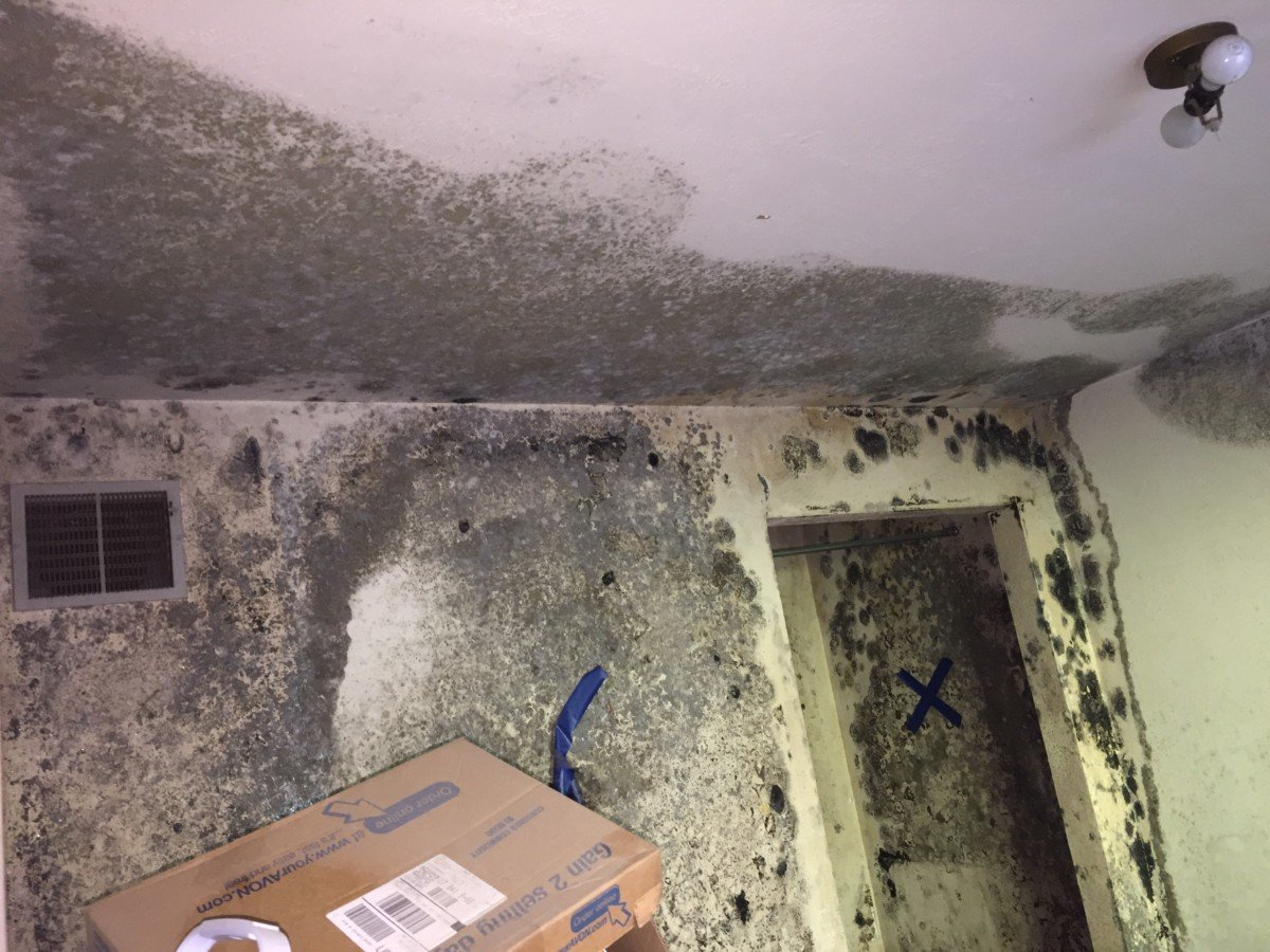 Do you need help in mold remediation in San Francisco Bay Area?