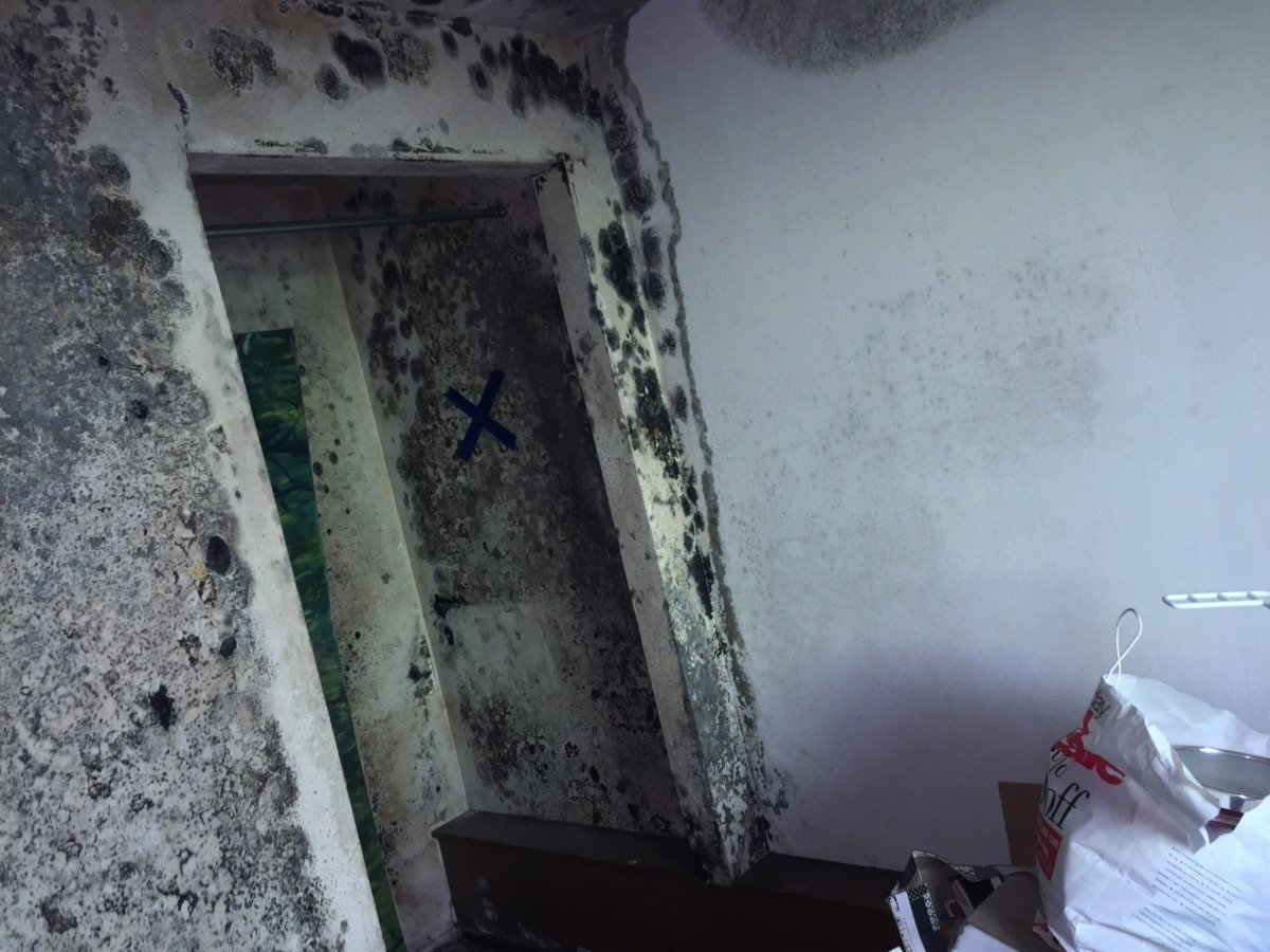 The process of mold removal begins with determining the reasons for its appearance.