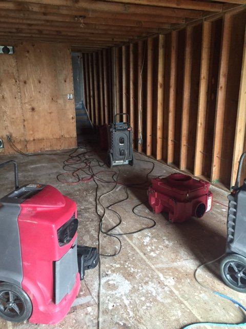 Get To Know Your Basement Mold