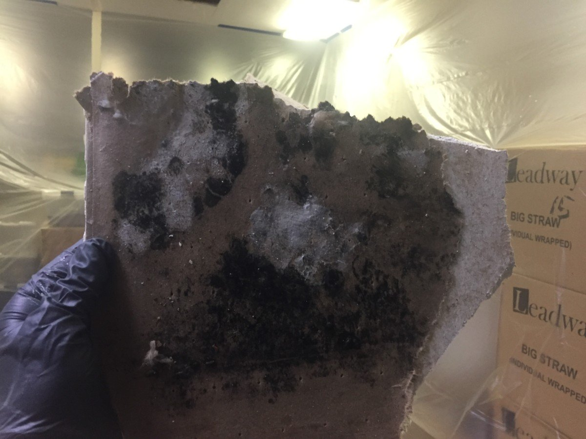 What You Should Know about, Mold Formations and Mold Removal in your home or office