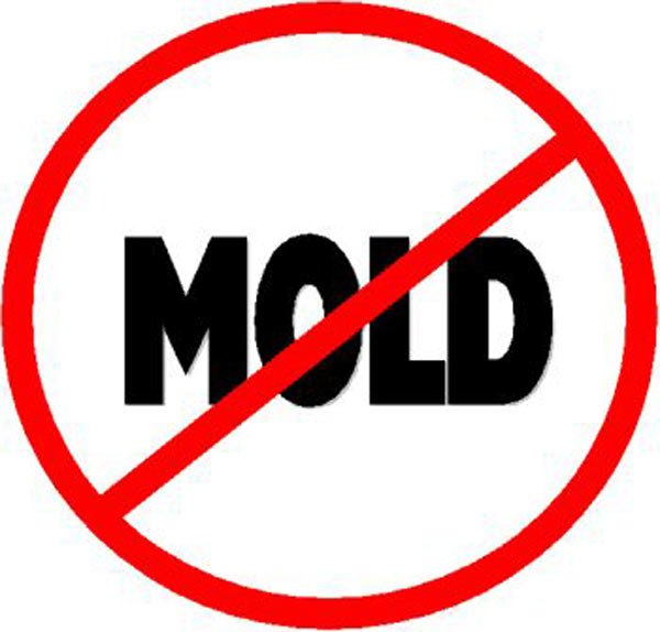 Tips To Stop Mold From Forming Following A Flood
