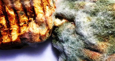 Mold makes food spoil quicker