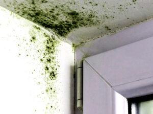Mold on the window upper corner