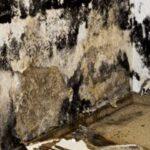 Mold removal company San Francisco