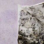 Mold and Mildew Repair